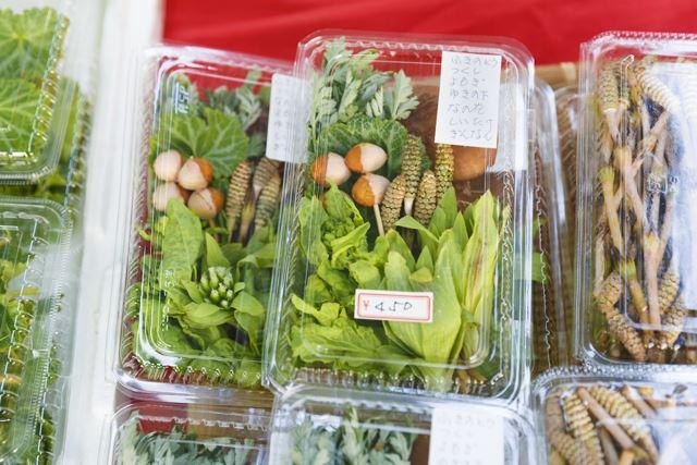 春の山菜はこの季節だけの楽しみ。豊かな風味とたっぷりの量に驚く