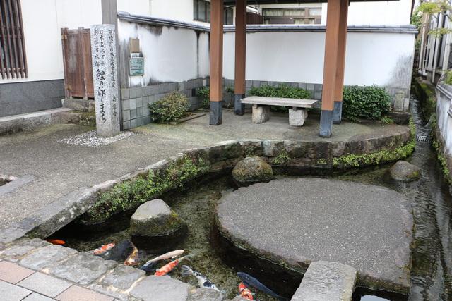 水の都を象徴する「鯉の泳ぐまち」の湧水スポット