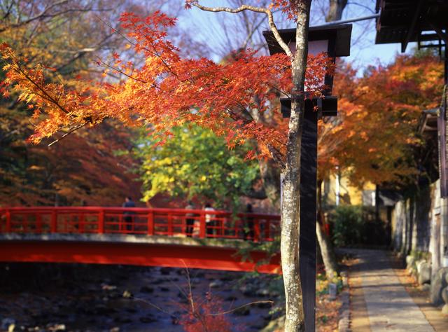 紅葉の時期が近づいてきた。温泉ひとり旅もいい(写真は修善寺温泉)
