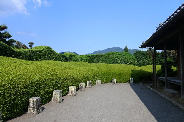 平山亮一庭園。石組みのない大刈り込みのみの庭園。前面のサツキの刈り込みは花の季節にはピンク色に染まる