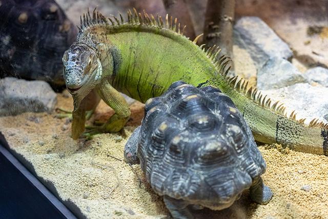 カメやヘビ、ワニやトカゲなど約40種類の爬虫類(はちゅうるい)などを展示する新施設が11月18日にオープンしました