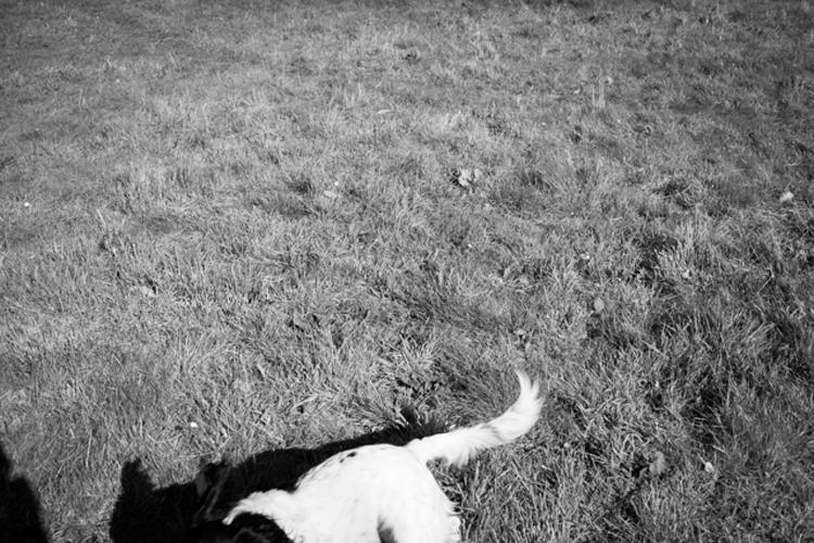連載エッセー「いつかの旅」 (18)私の犬