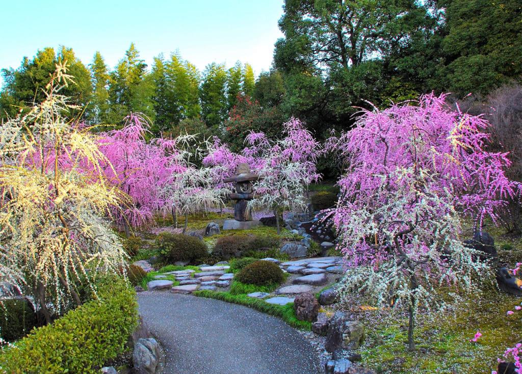 京都に最初の春を伝える「城南宮」のしだれ梅