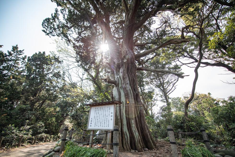 大瀬崎神社にはご神木のほか不思議なスポットがいくつかある