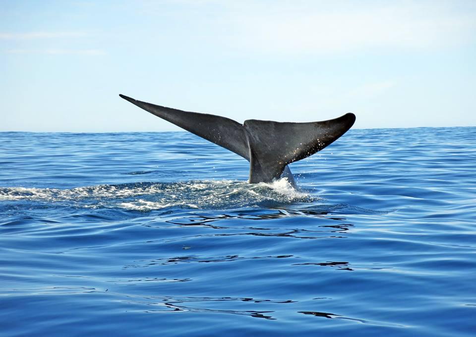 シロナガスクジラに会いたい! 「クジラの首都」アイスランド・フーサヴィーク