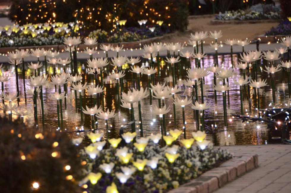 光の花が輝く庭 日本三大イルミネーション、あしかがフラワーパーク