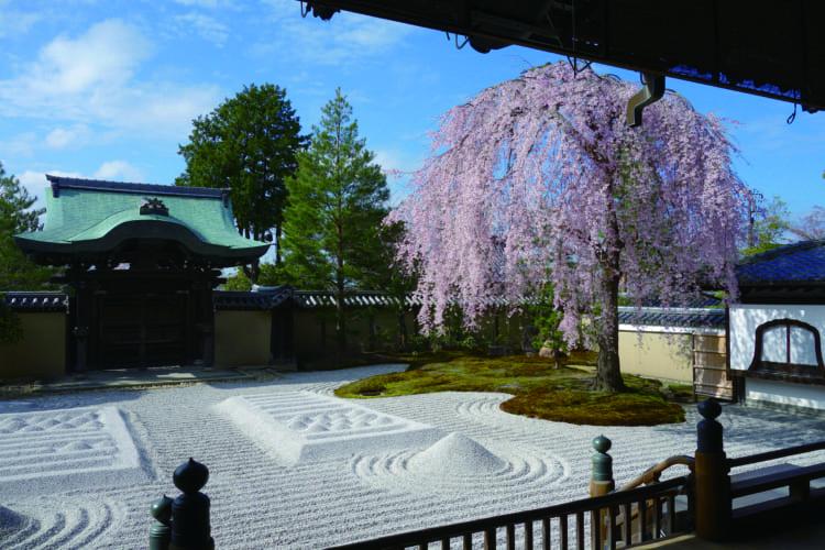 咲き誇る、京都の名庭のしだれ桜を訪ねて 退蔵院と高台寺