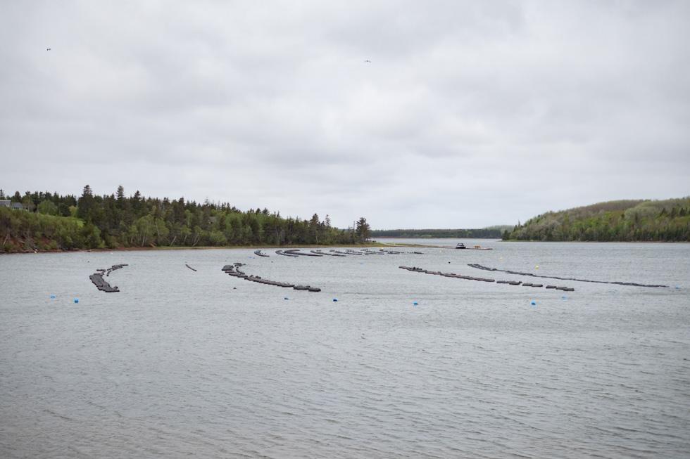 「赤毛のアン」の島は美食の島 カナダのプリンス・エドワード島