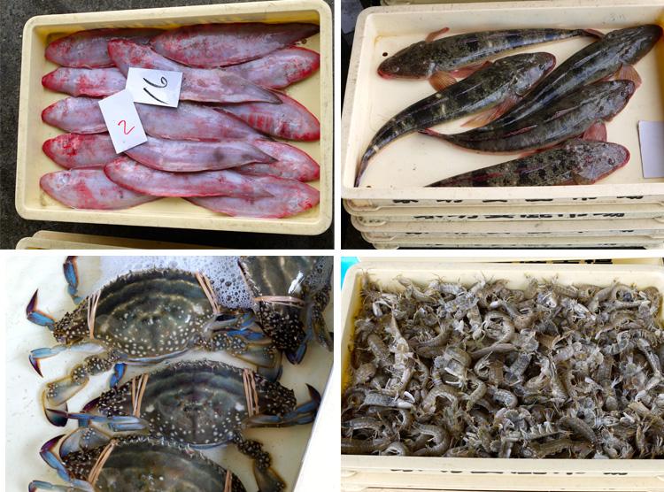 漁船登録日本一、新鮮な魚たっぷり 播磨灘の離島 坊勢島