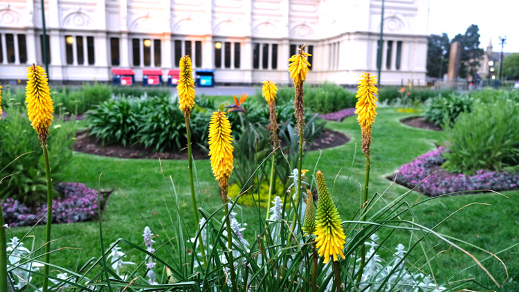 庭園には色とりどりの花々と緑があふれる