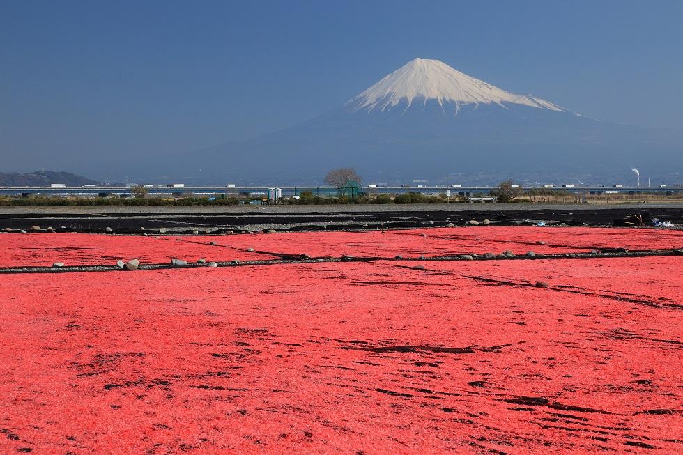 富士山のふもとで名酒に酔い、サクラエビとマグロに舌鼓の静岡旅