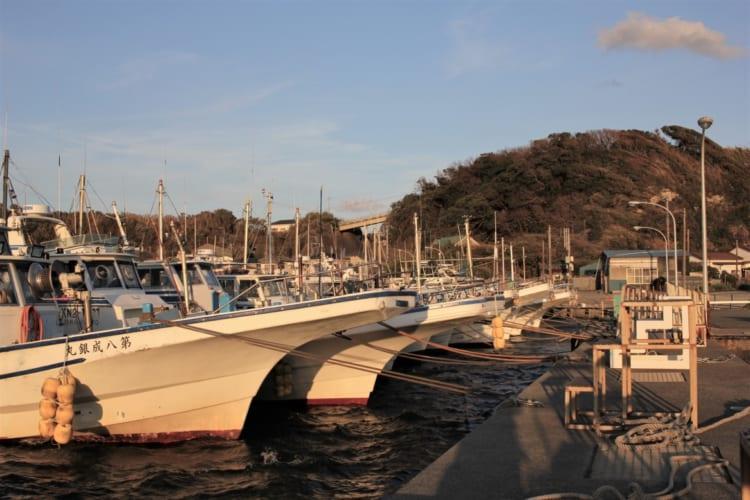 風にもめげず 春告魚・メバルと知恵比べ 神奈川・三浦半島