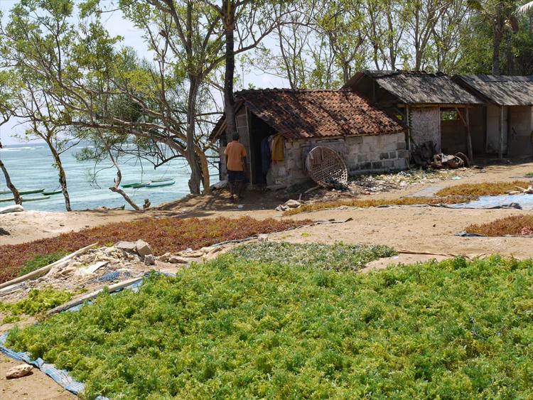 バリ島から一歩足を延ばしてヌサ・レンボンガン