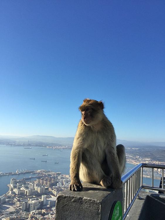 海峡に突き出た英領ジブラルタルへ 南スペインはじっこ紀行02