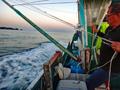 「カツオのケンケン漁」をめぐる二つの謎 和歌山沖
