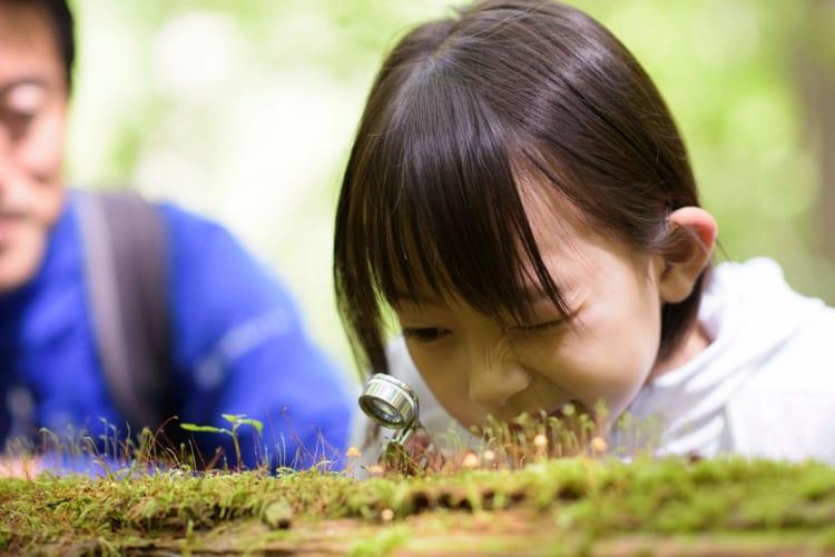 星野リゾート、子どもの自由研究に役立つ、アクティビティー10選