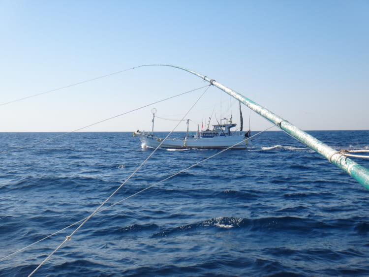 カツオのケンケン漁をめぐる二つの謎 漁師の船で確かめた 和歌山沖