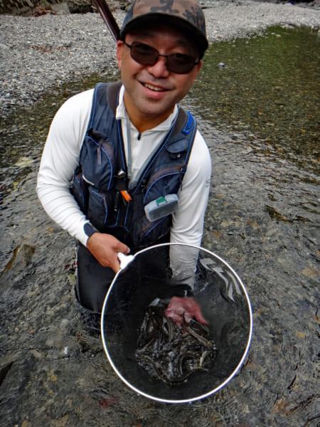 ギューン!と次々に釣れるアユ 友釣りを満喫 奈良県上北山村