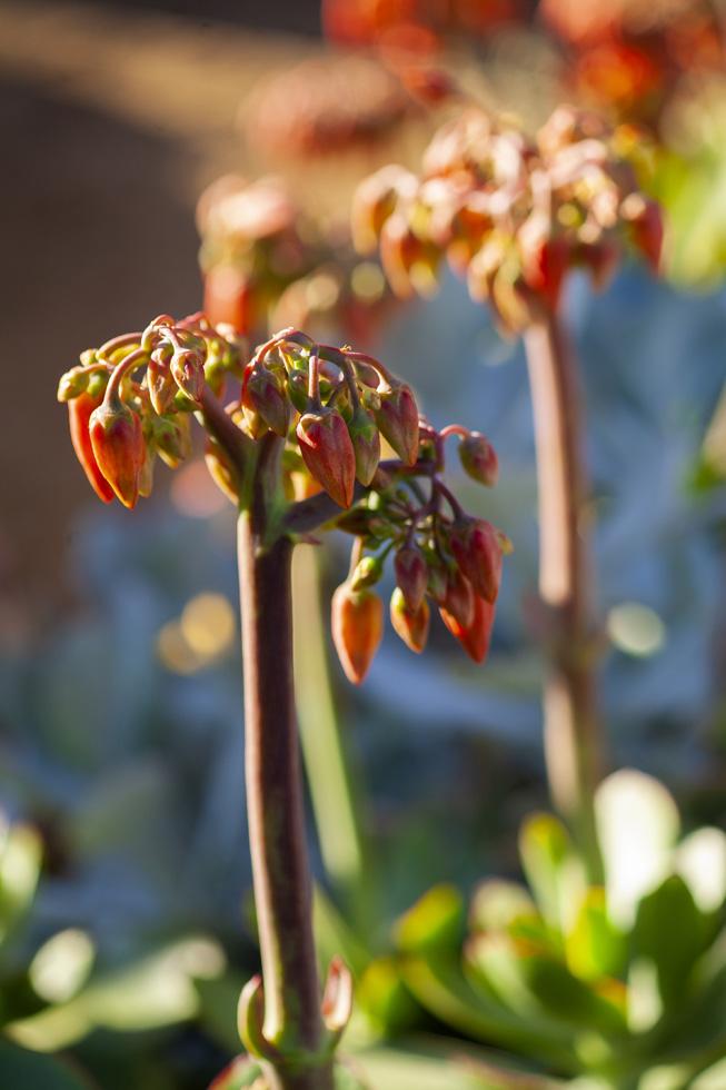 珍しい動植物たちの「生きるエネルギー」に触れる  西オーストラリア・ネイチャートリップ
