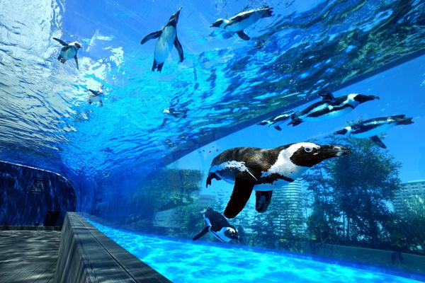 今すぐ行きたい! プロが選ぶオススメの水族館ベスト10(5位~1位)