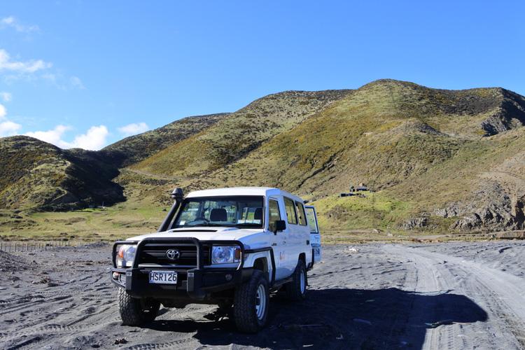 ニュージーランドのオットセイは休暇中、世界で最もクールな首都のツアー