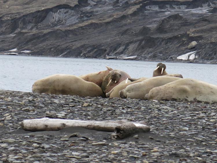 「海のサファリ」の旅 ル・ボレアルで行く北極クルーズ(前編)
