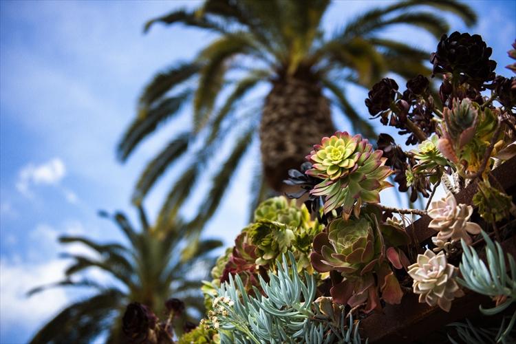 異国情緒あふれる街、写真家が旅するサンディエゴ