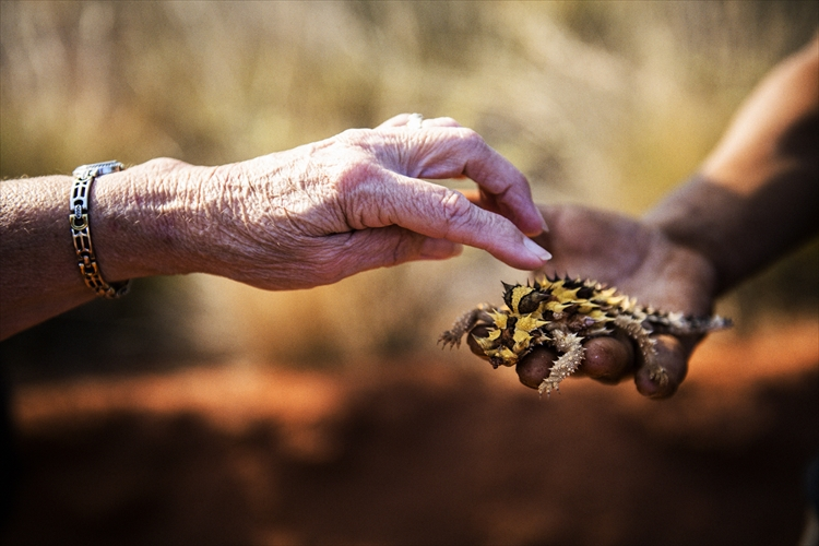 """オーストラリアで""""砂漠の珍獣""""モロクトカゲに触る"""