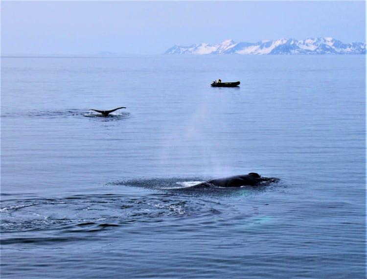 「海のサファリ」の旅 ル・ボレアルで行く北極クルーズ(後編)