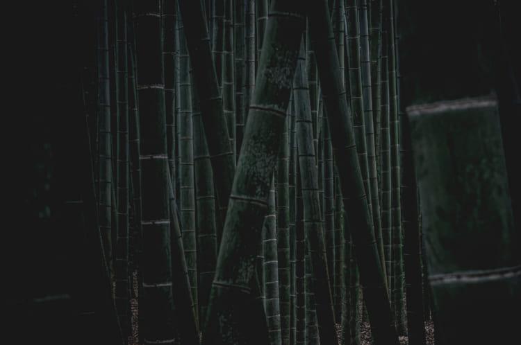 竹を観た足で泊まりにきた、あの人の息子 報国寺