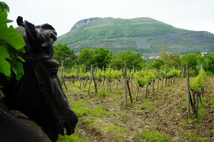写真家、エレガントなワインの造り手に イタリア・カンパーニャ州