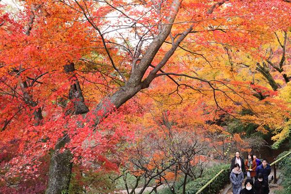 嵐山や香嵐渓は? 全国の紅葉の見頃をチェック