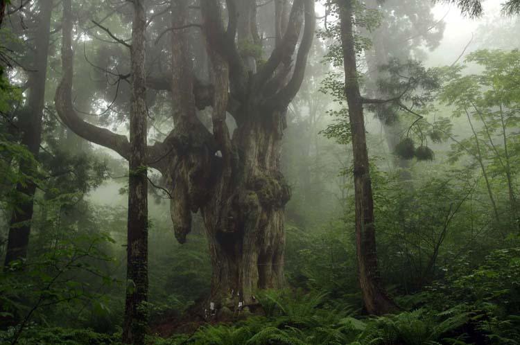 『もののけ姫』の森の雰囲気 不思議だらけの隠岐諸島