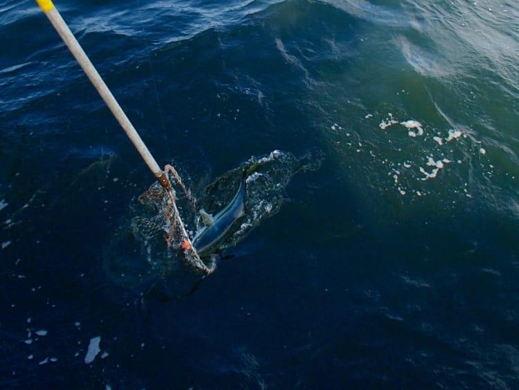 雪辱のマダイ釣り タイラバでついにゲット 神奈川県横須賀市沖