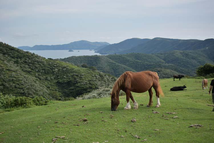 草を食む馬