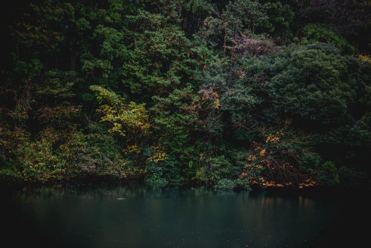 この男と、肉体はもういいのだ 鎌倉湖畔