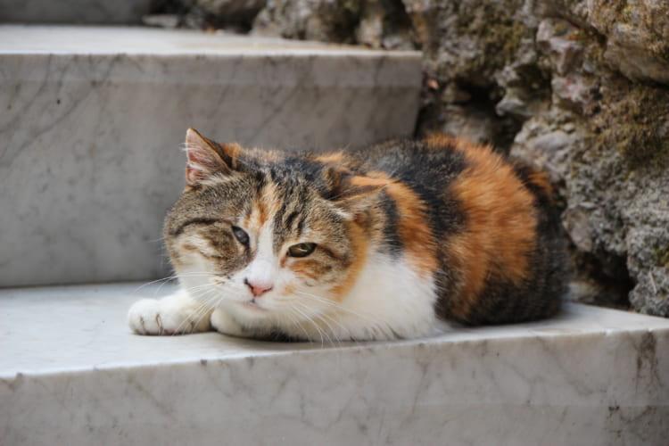 ある夏の日、カッラーラ名物、白大理石の上で涼むネコ