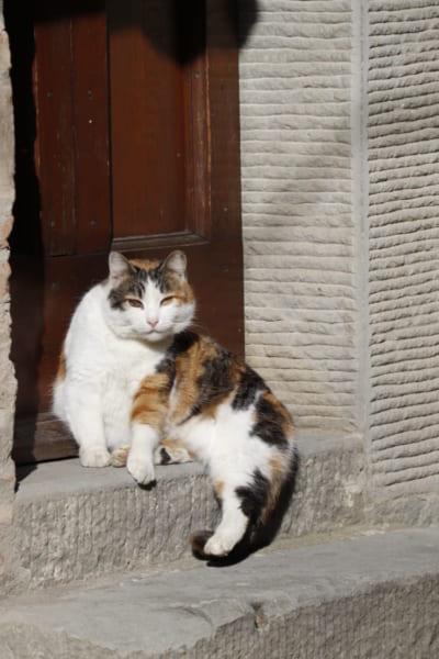 コルトナの旧市街は、迷路のような小道が張り巡らされている。先程会ったネコともう一度鉢合わせすることも