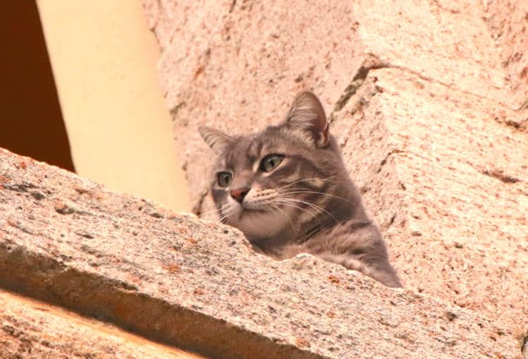 聖ビアージョ教会の司祭館から顔を出していたネコ