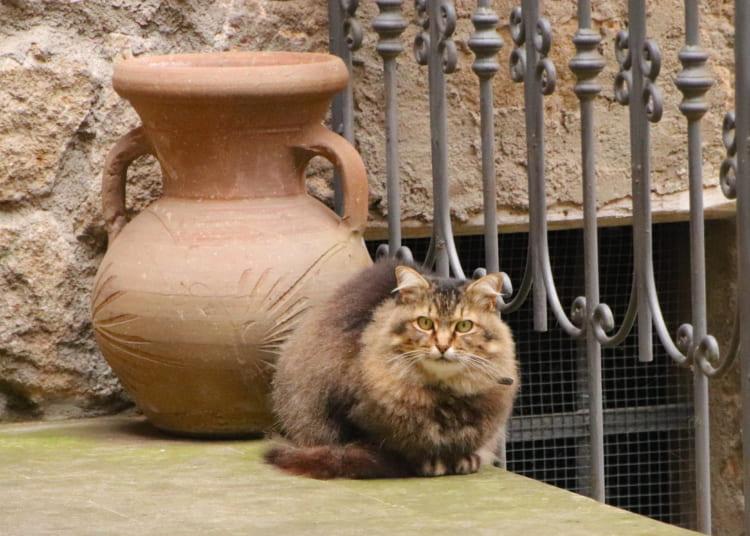 トスカーナの庭を飾る典型的なテラコッタ壺(つぼ)の前で