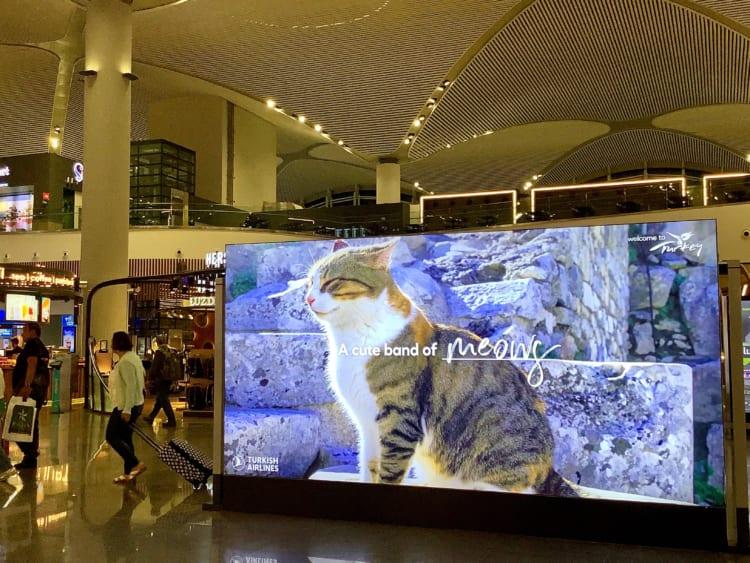 イスタンブール空港、トルコ航空の広告ボード。猫がいっぱいいる国ならでは