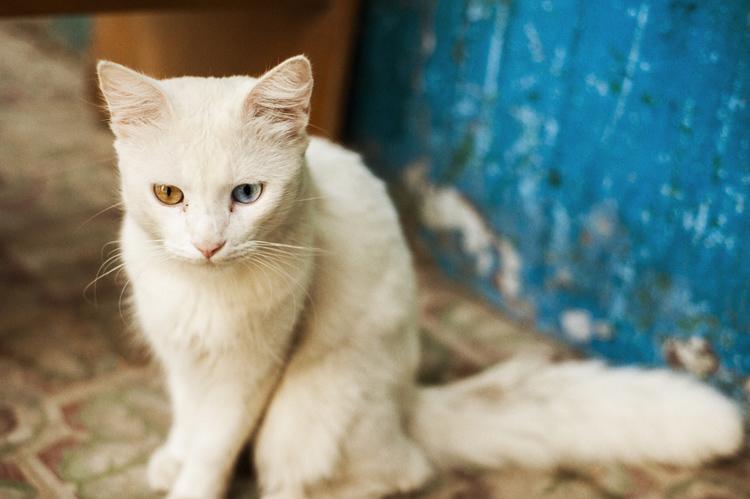 チーズの香りにつられて入ってきたキューバの猫