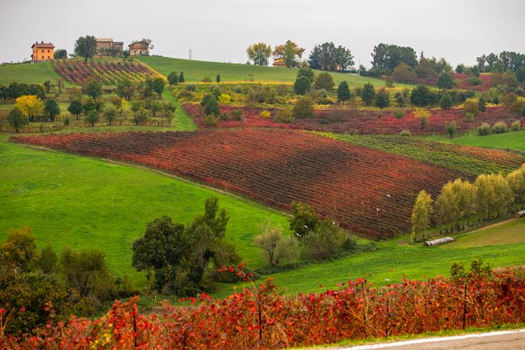 ポー川支流の土壌が決め手 「川のワイン」を訪ねて  (1) イタリア・エミリア=ロマーニャ州