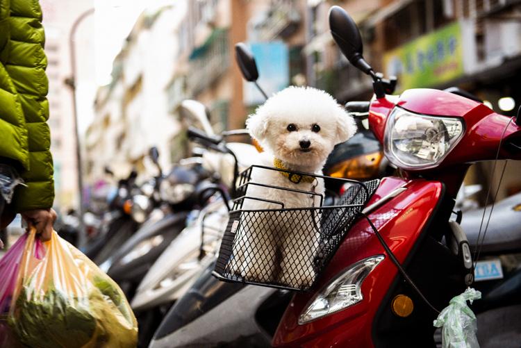 台北、バイクのカゴからごあいさつ