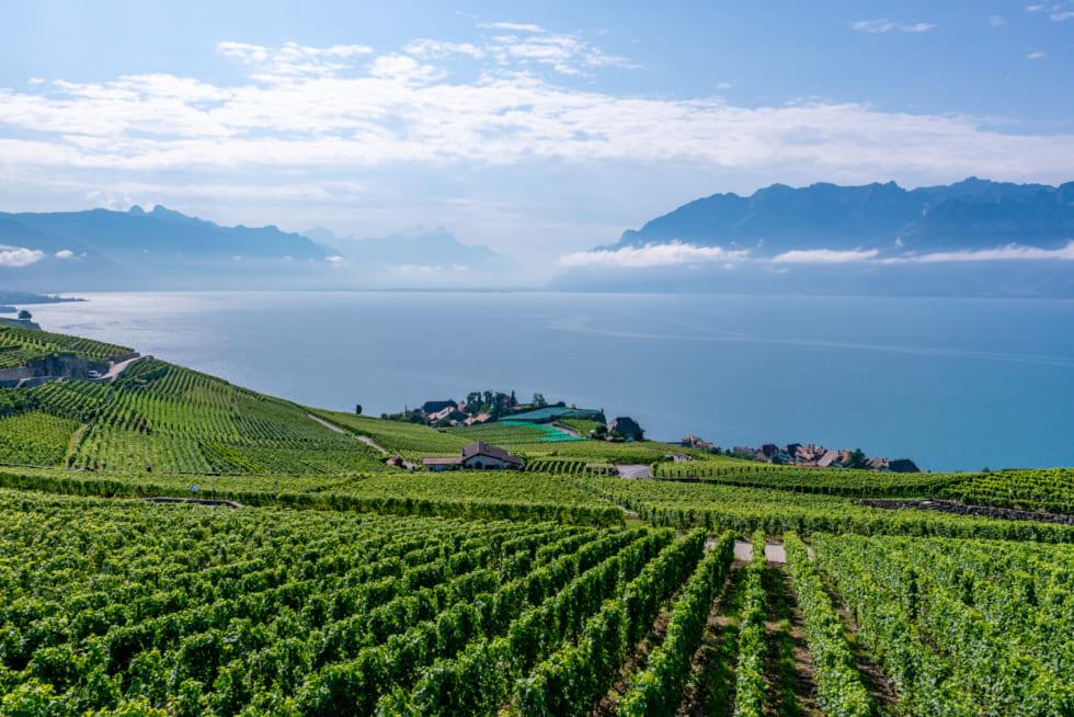 絶景ワインヤードでクラクラ 1等車と5つ星ホテルで巡るスイス1周鉄道旅(6) モントルー~ラヴォー