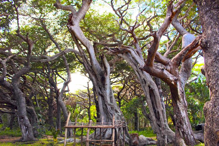 ニューカレドニアの離島、イル・デ・パンは海の宝石箱!