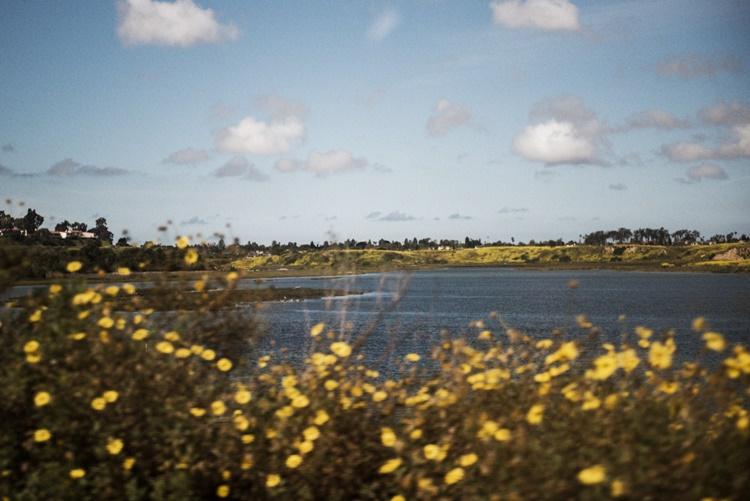 カリフォルニアを埋め尽くす野花たち