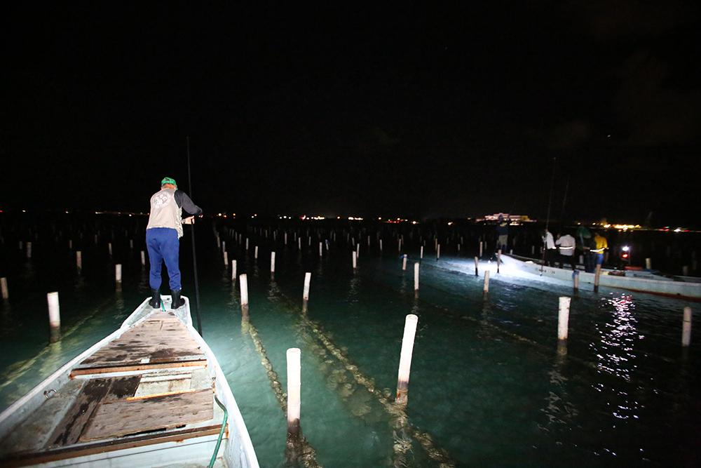 とれたてのカニ、クロダイにサヨリ……浜名湖の「たきや漁」体験で気分は漁師!