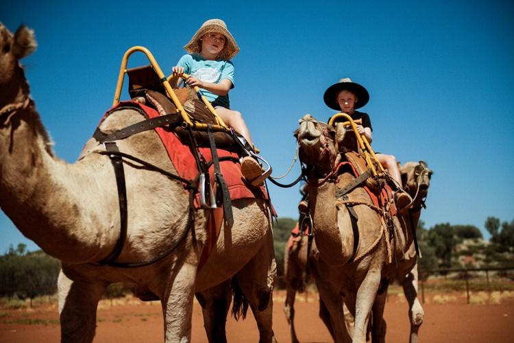 オーストラリアの砂漠でラクダに乗って散歩