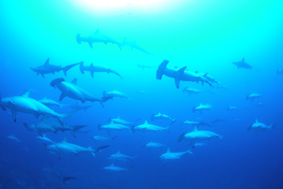 海底遺跡やハンマーヘッドシャークの群れ 日本最西端の与那国島